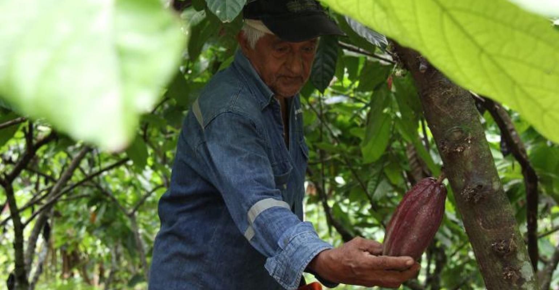 Don Carlos, un campesino de este pueblo de los Montes de María, le abrió las puertas de su cultivo a El Universal.